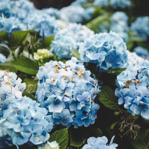 blue and white petaled flowers close-up photography